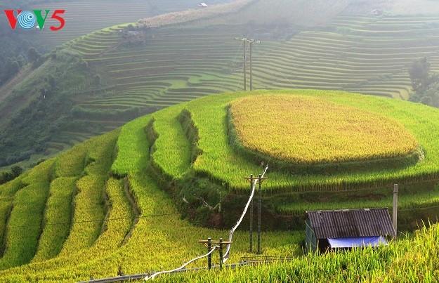 Yên Bái: Sẵn sàng cho Tuần Văn hoá -  Du lịch Ruộng bậc thang Mù Cang Chải 2017 - ảnh 3