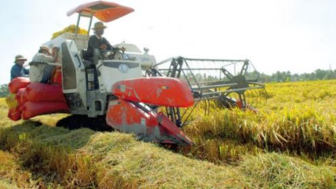 Khu vực nông thôn là chìa khóa tăng trưởng kinh tế tại các nước đang phát triển  - ảnh 1