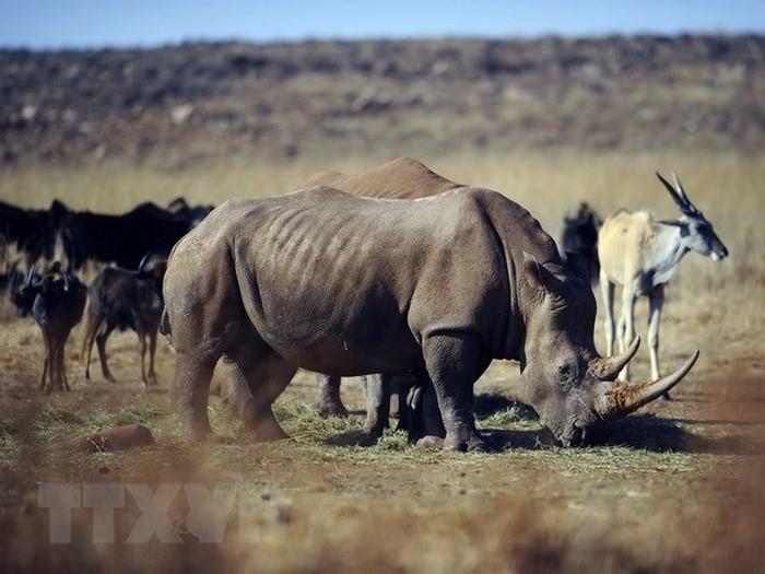 Giới thiệu cuộc thi phim ngắn về phòng chống buôn bán trái phép động vật hoang dã  - ảnh 1