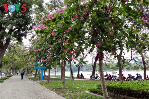 US news website names Hanoi among 13 best places to visit in March - ảnh 2