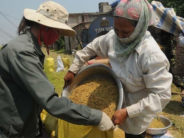Во Вьетнаме отмечают Всемирный день продовольствия - ảnh 1