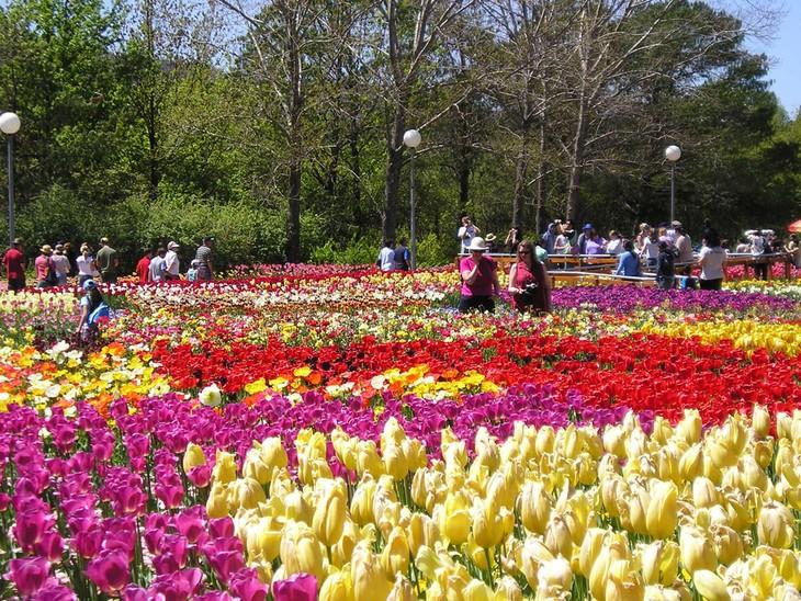 Далат – город цветочных фестивалей - ảnh 2