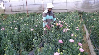 Далат – город цветочных фестивалей - ảnh 4