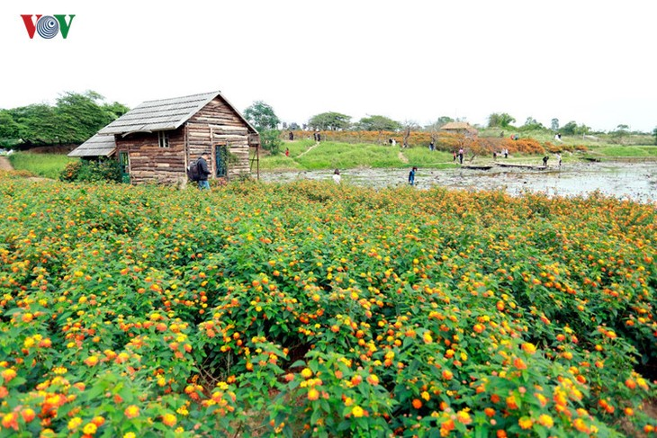 Hanoians visit flower villages as Tet holiday nears - ảnh 3