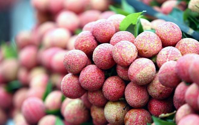 การส่งออกลิ้นจี่และโอกาสให้แก่การส่งออกผลิตภัณฑ์การเกษตรของเวียดนาม - ảnh 1