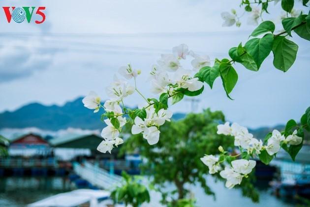 ความสวยงามของเกาะบิ่งบา - ảnh 15