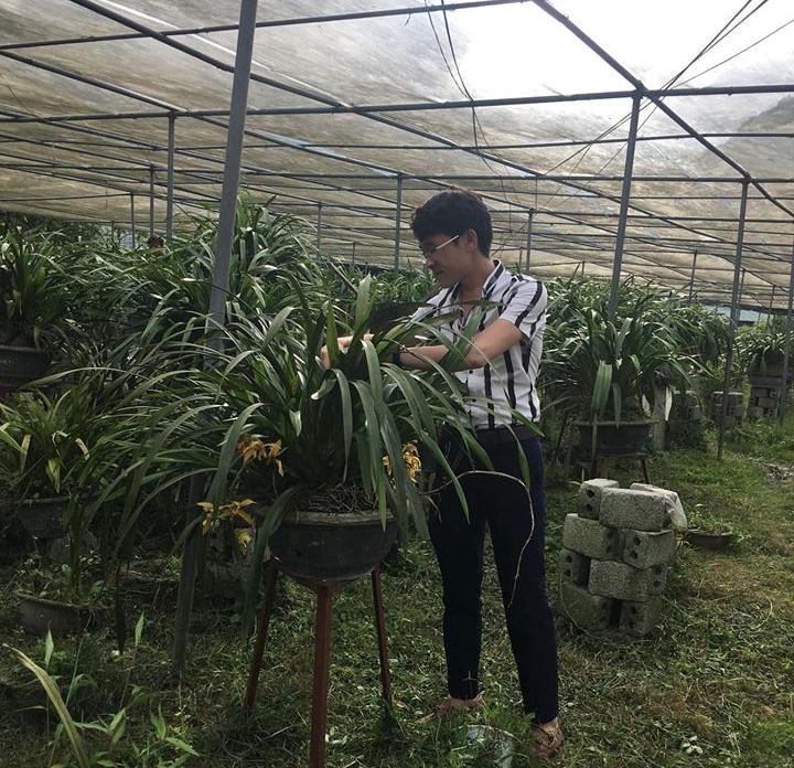 การปลูกดอกกล้วยไม้สกุลซิมบิเดียมช่วยให้ชาวบ้านต่าฝิ่นหลุดพ้นจากความยากจน - ảnh 1