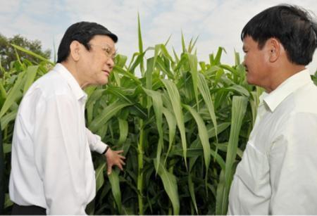 ประธานประเทศอวยพรปีใหม่ชาวอ.กู๋จี นครโฮจิมินห์ - ảnh 1