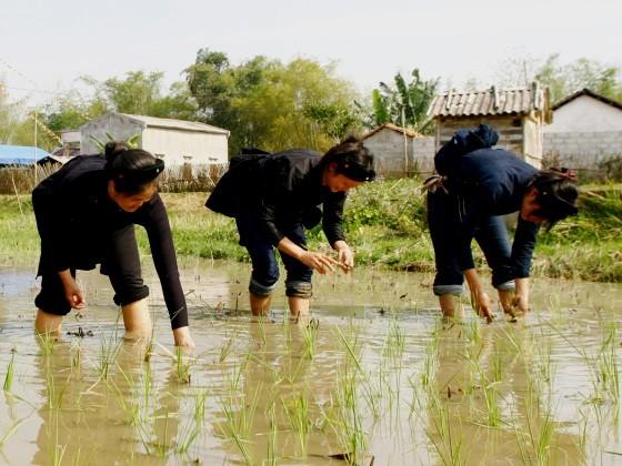 ชนเผ่า หนุ่ง ในเวียดนาม - ảnh 2