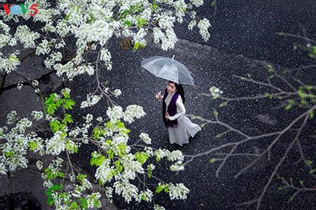 Hoài cảm mưa phùn Hà Nội - ảnh 5