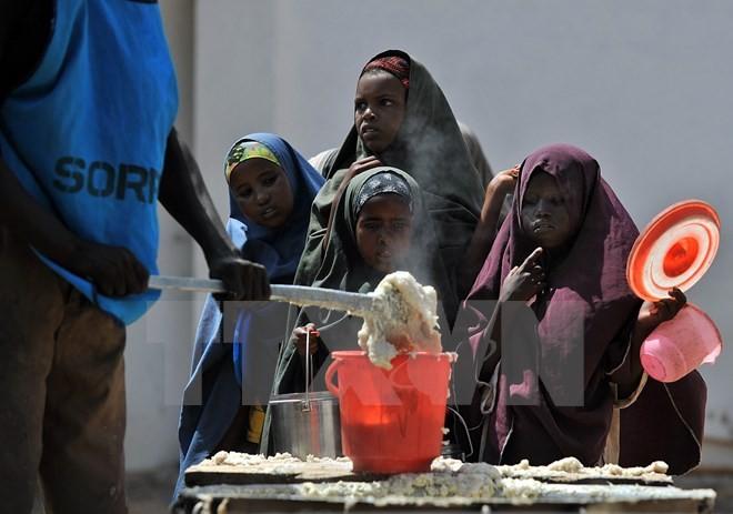 ВТО и ФАО активизируют сотрудничество в сферах торговли и продовольственной безопасности - ảnh 1