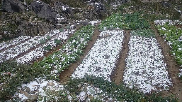 Жители уезда Меовак борются с морозом - ảnh 3