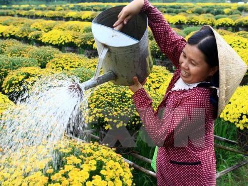 Цветочная деревня Шадэк привлекает к себе большое внимание туристов - ảnh 1