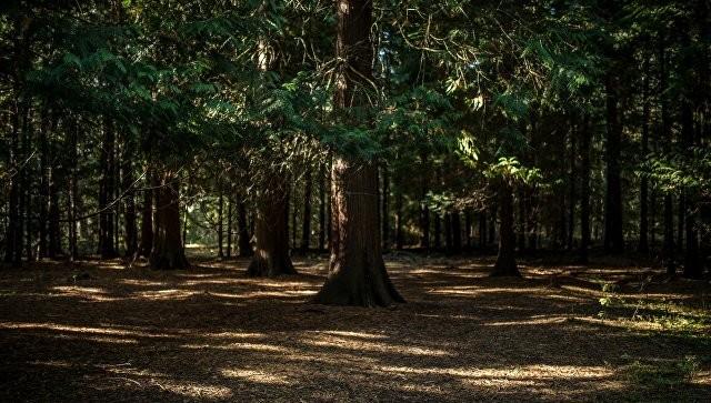 Международный день лесов: ФАО призвала страны Центральной Америки защитить «зеленые легкие» - ảnh 1