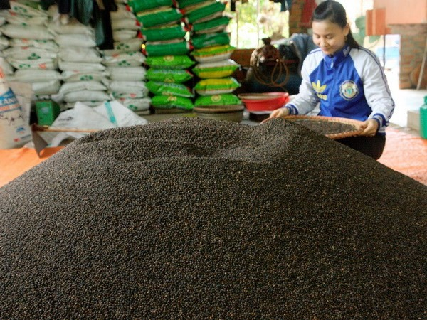 Vietnam remains world's top pepper exporter - ảnh 1