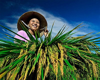 Farmers sent abroad for study - ảnh 1