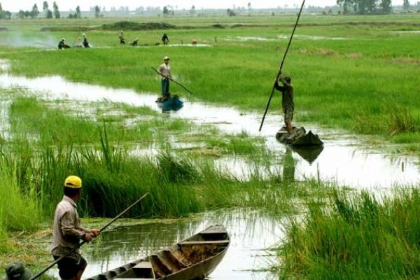 Project enhances climate change resilience of Mekong Delta provinces - ảnh 1