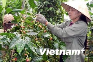 165 million USD allocated for poverty reduction in central Vietnam - ảnh 1