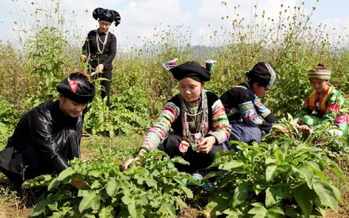 Ha Giang province urged to improve life of ethnic minority - ảnh 1