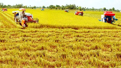 Mekong Delta Economic Cooperation Forum set for July - ảnh 1