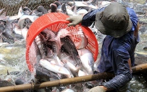 US Senate votes to end catfish inspection program  - ảnh 1