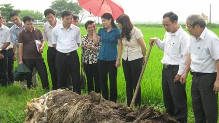 Le Van Tri y trabajos científicos para el desarrollo agrícola - ảnh 1
