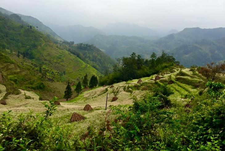 Vietnam fija como meta lograr un 42% la cubierta forestal para 2020 - ảnh 1