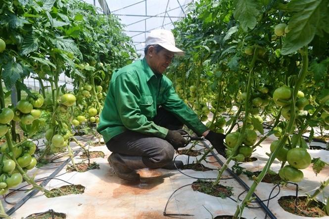 Lam Dong destina fondo millonario para construir una cadena de producción agrícola sostenible  - ảnh 1