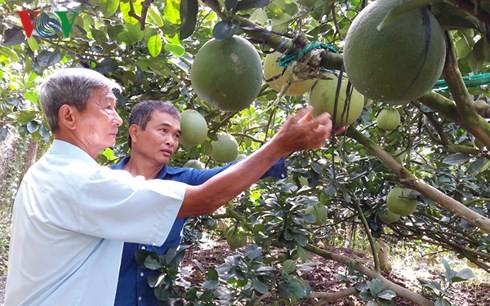 Tran Cong Len apasionado por la ayuda a los agricultores  - ảnh 1