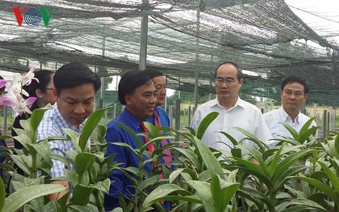 Dong Thap soll typische Reis- und Blumensorten der Provinz produzieren  - ảnh 1