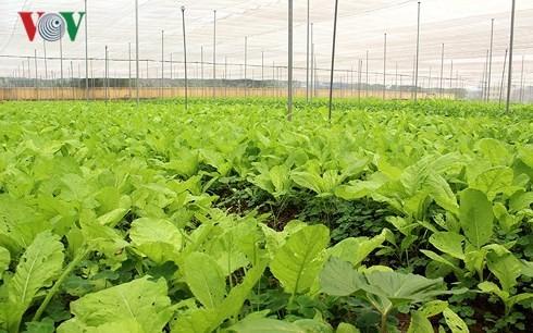 Entwicklung der Hightech-Landwirtschaft – Probleme und Lösungen - ảnh 1