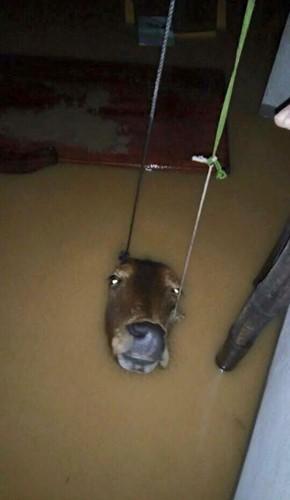 Überflutungen in Zentralvietnam - ảnh 7