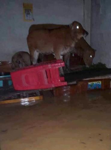Überflutungen in Zentralvietnam - ảnh 8