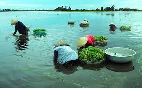 Das Alltagsleben in Dong Thap Muoi während der Hochwassersaison - ảnh 1