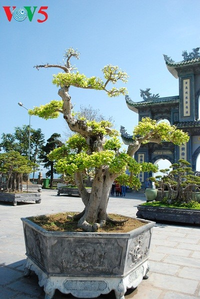 Halbinsel Son Tra - eine exotische Landschaft - ảnh 10