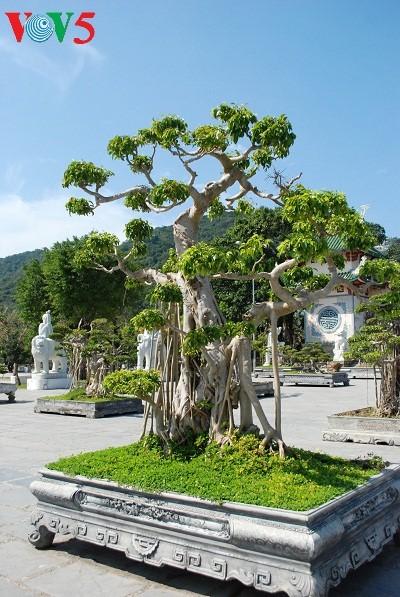 Halbinsel Son Tra - eine exotische Landschaft - ảnh 11