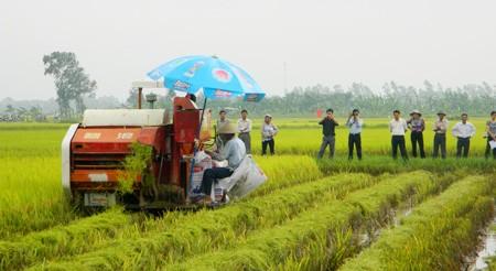 ส่งเสริมการใช้เครื่องจักรกลการเกษตรในการปลูกข้าวในเขตที่ราบลุ่มแม่น้ำโขง - ảnh 1