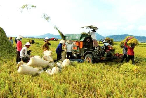 ส่งเสริมการใช้เครื่องจักรกลการเกษตรในการปลูกข้าวในเขตที่ราบลุ่มแม่น้ำโขง - ảnh 2