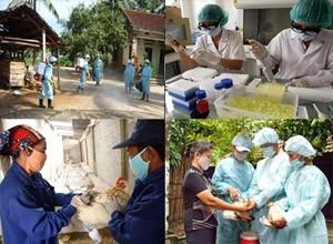 เวียดนามพร้อมที่จะรับมือกับโรคระบาดไข้หวัดนกสายพันธุ์ใหม่ H7N9 - ảnh 1