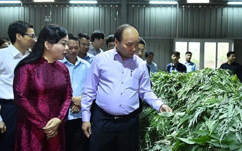 นายกรัฐมนตรี เหงียนซวนฟุก เป็นประธานการประชุมทั่วประเทศเกี่ยวกับการพัฒนายาสมุนไพรเวียดนาม - ảnh 1