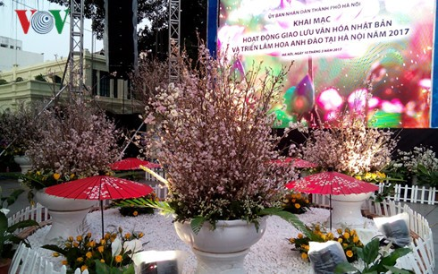 Cherry blossom festival boosts Vietnam-Japan cultural exchange  - ảnh 1
