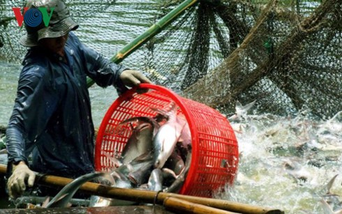 First tra fish fair in Hanoi helps expand overseas market - ảnh 1