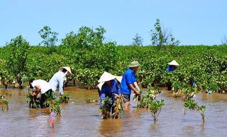 Vietnam's adaptation to climate change - ảnh 1