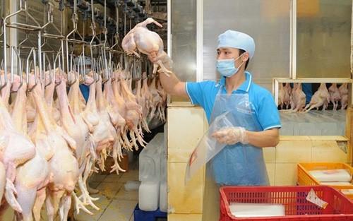 Le poulet vietnamien exporté au Japon - ảnh 1