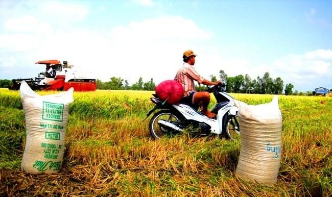 Объем экспорта риса Вьетнама и Таиланда составляет около 50% в мире - ảnh 1