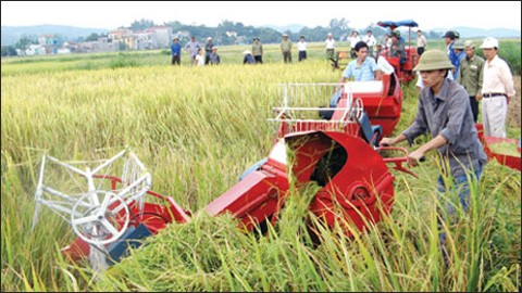 Japan to introduce investment opportunities in Vietnam's agriculture - ảnh 1