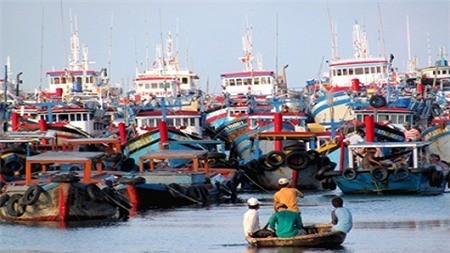 В июле будет оглашена политика о содействии рыбакам - ảnh 1