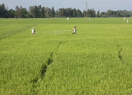 Строительство новой деревни в сочетании с охраной окружающей среды в Киензянге - ảnh 2