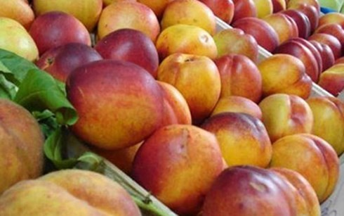 Польша подписала соглашение об экспорте яблок во Вьетнам - ảnh 1