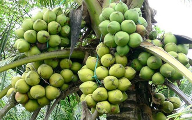 Популярные фрукты на юго-западе Вьетнама - ảnh 13